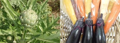 一緒に野菜を作りませんか?農業や自然が好きな方、内に秘めたる職人魂をお持ちの方、大歓迎です!