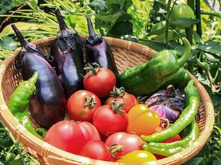 季節の野菜表